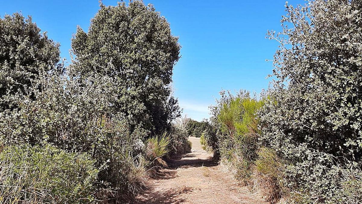 El gran sendero de la naturaleza de Zamora, deshomologado por falta de mantenimiento