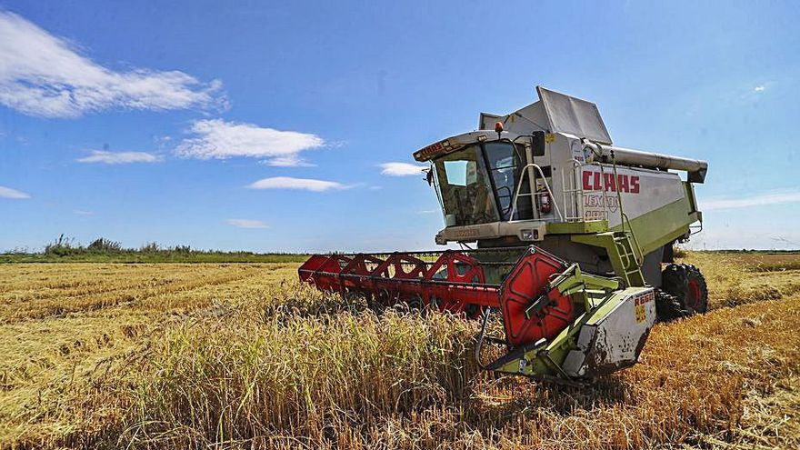 Los agricultores piden al Consell que pague la retirada de la paja del arroz