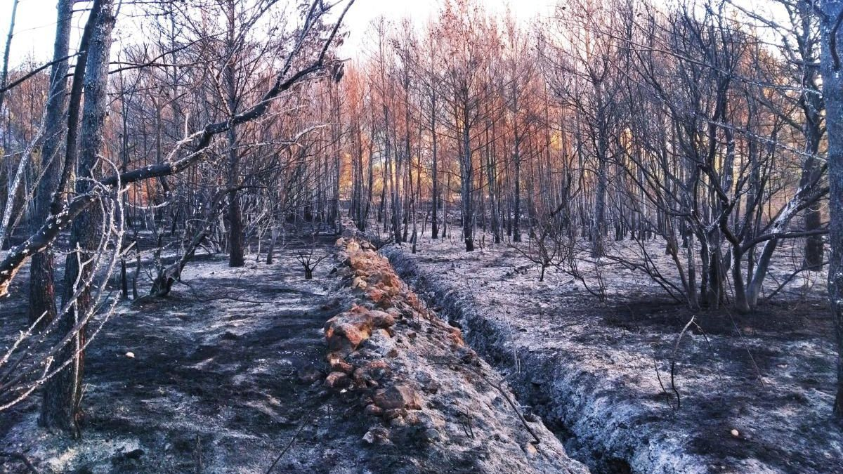 Otro bosque devorado por el fuego en Xàbia: el incendio de Benimadrocs arrasa 2 hectáreas