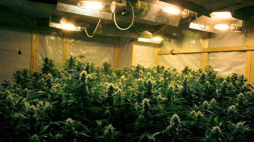 Desmantelan una plantación de cannabis en una vivienda de El Espinar (Segovia)