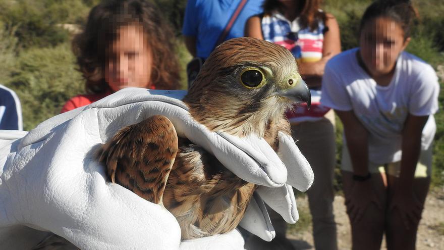 Jornada de anillamiento en El Campello por el Día Mundial de las Aves