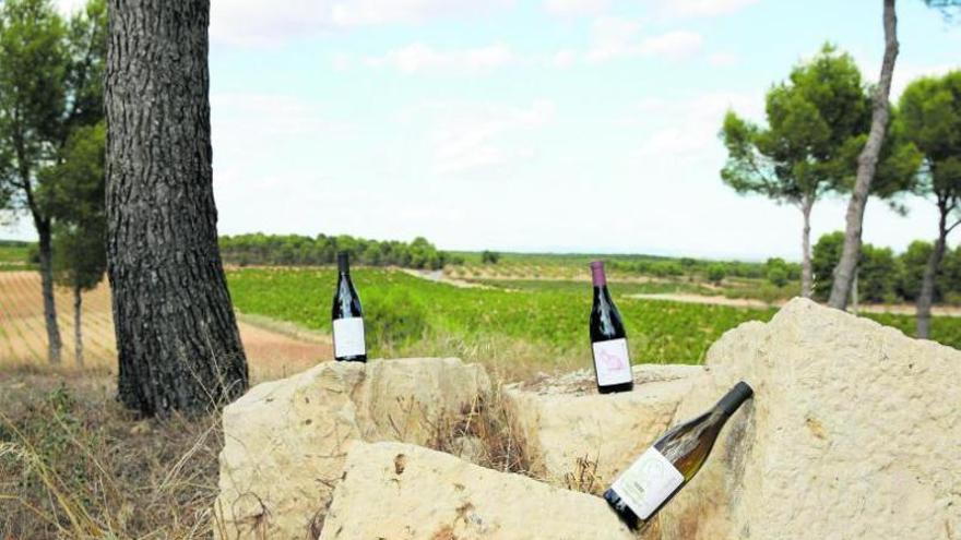 Una historia de viñas, fudres y pasión por el vino
