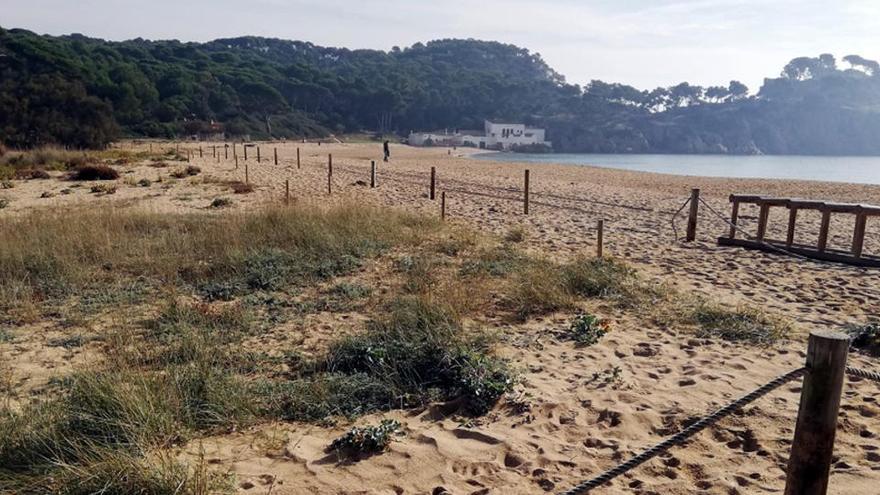 Palamós protegeix les dunes de la platja de Castell, una de les poques encara verges de la Costa Brava