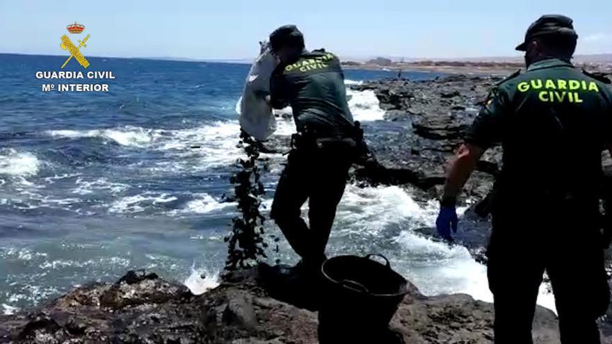 Tres personas capturan marisco de forma ilegal en Fuerteventura