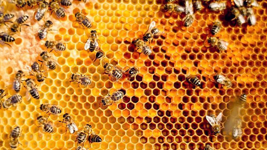 Jornada sobre la presencia de pesticidas en la cera de abejas
