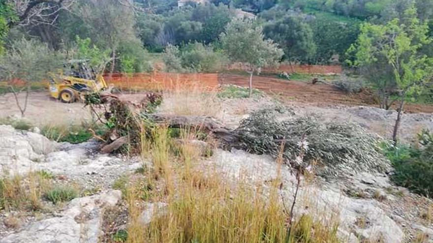 Independents denuncia una tala de árboles en Galilea