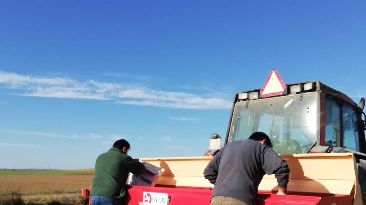 Trabajos de siembra en un campo de ensayo