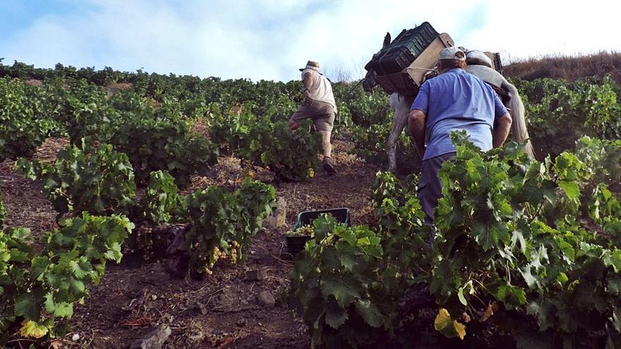 La venta del vino de Málaga está aún un 30% por debajo del nivel preCovid y el sector mira ya a 2022