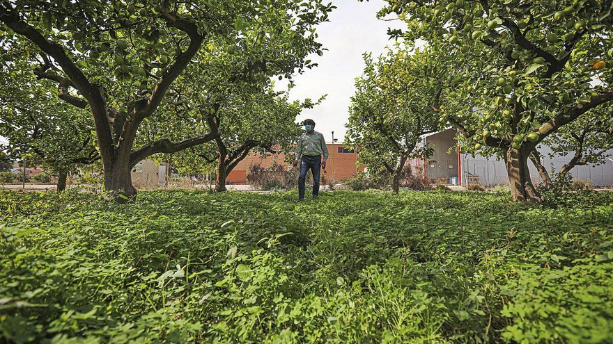El Vega Renhace apostará por la agricultura ecológica como motor de desarrollo económico