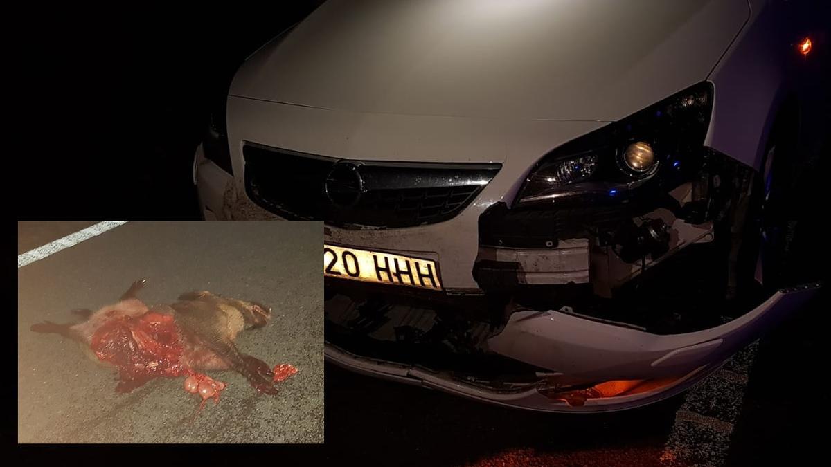 El coche accidentado esta tarde y el jabalí que protagonizó el accidente.