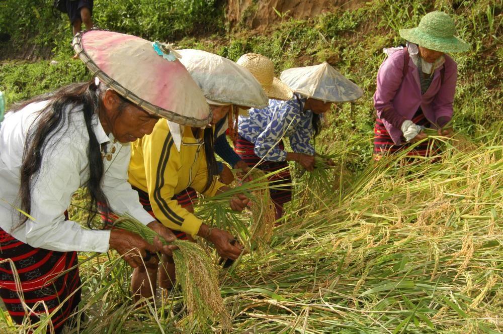 Filipinas - El Hudhud, tradición de cantos narrativos de la comunidad ifugao, conocida por sus arrozales en terrazas.