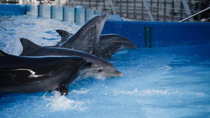 Realizan el primer estudio sobre proteínas en el semen de los delfines