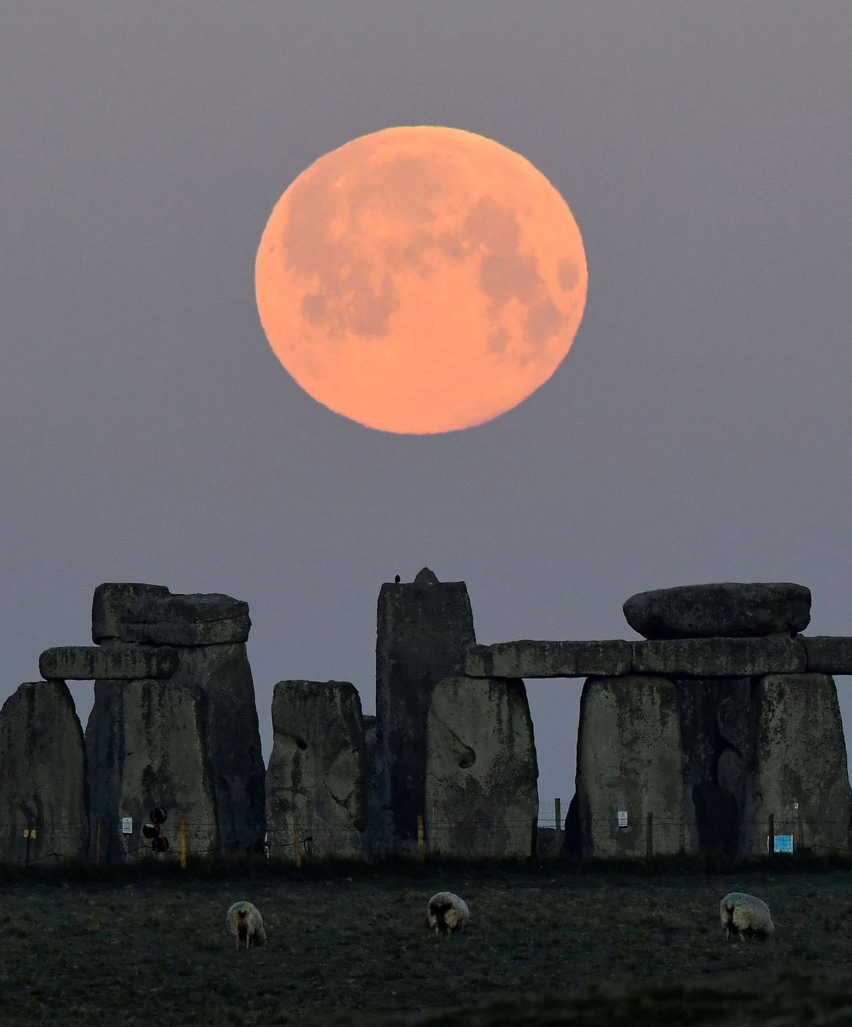The full moon , know (109394100).jpg