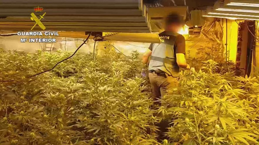 Cae un grupo criminal dedicado al cultivo de marihuana en la provincia de Málaga