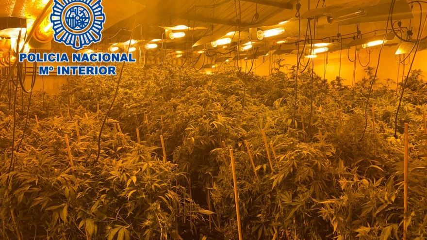 La Policía Nacional desarticula una organización, con vínculo en Cabra, dedicada a grandes cultivos 'indoor' de cannabis