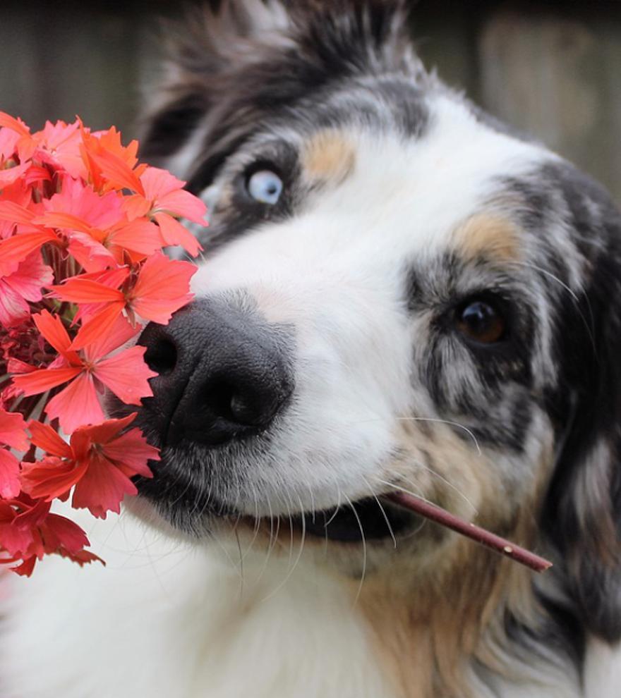 Las plantas más tóxicas para nuestros perros y gatos