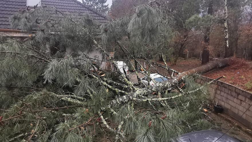 """Una familia de Chapela, """"bloqueada"""" tras caer un pino de 40 metros sobre su vivienda"""