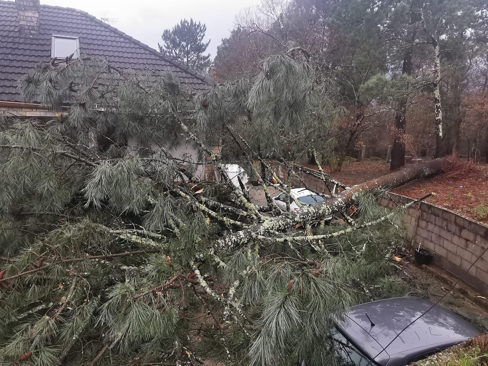 La borrasca Hortense tira un enorme pino sobre una vivienda en Redondela