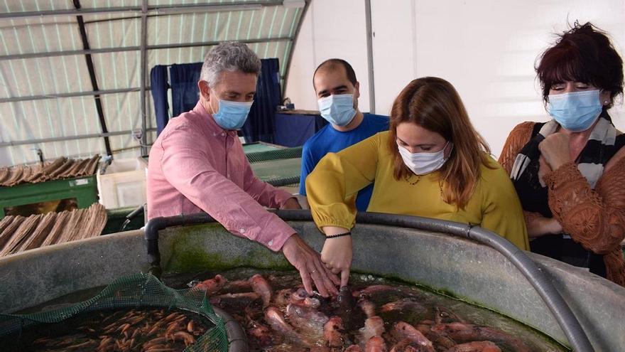 La Diputación y el Aula del Mar imparten jornadas sobre acuaponía
