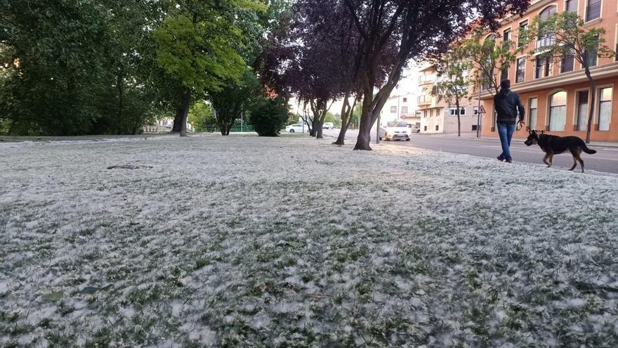Los alérgicos de Zamora, en riesgo este fin de semana por el aumento de niveles de polen