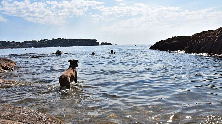 Sant Feliu de Guíxols habilita una cala on poden accedir gossos