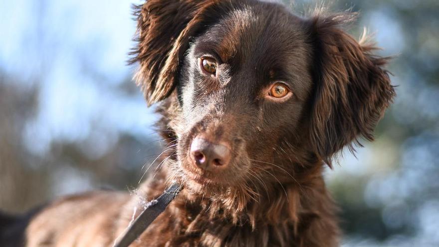 Siete cosas que hacen los perros y su significado