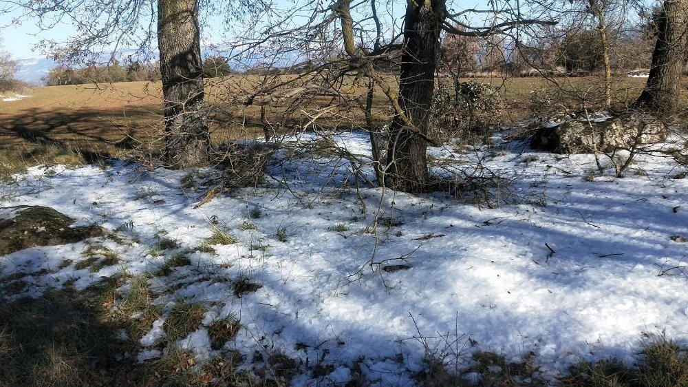 Després de la boira gebradora, el gel es queda a terra.