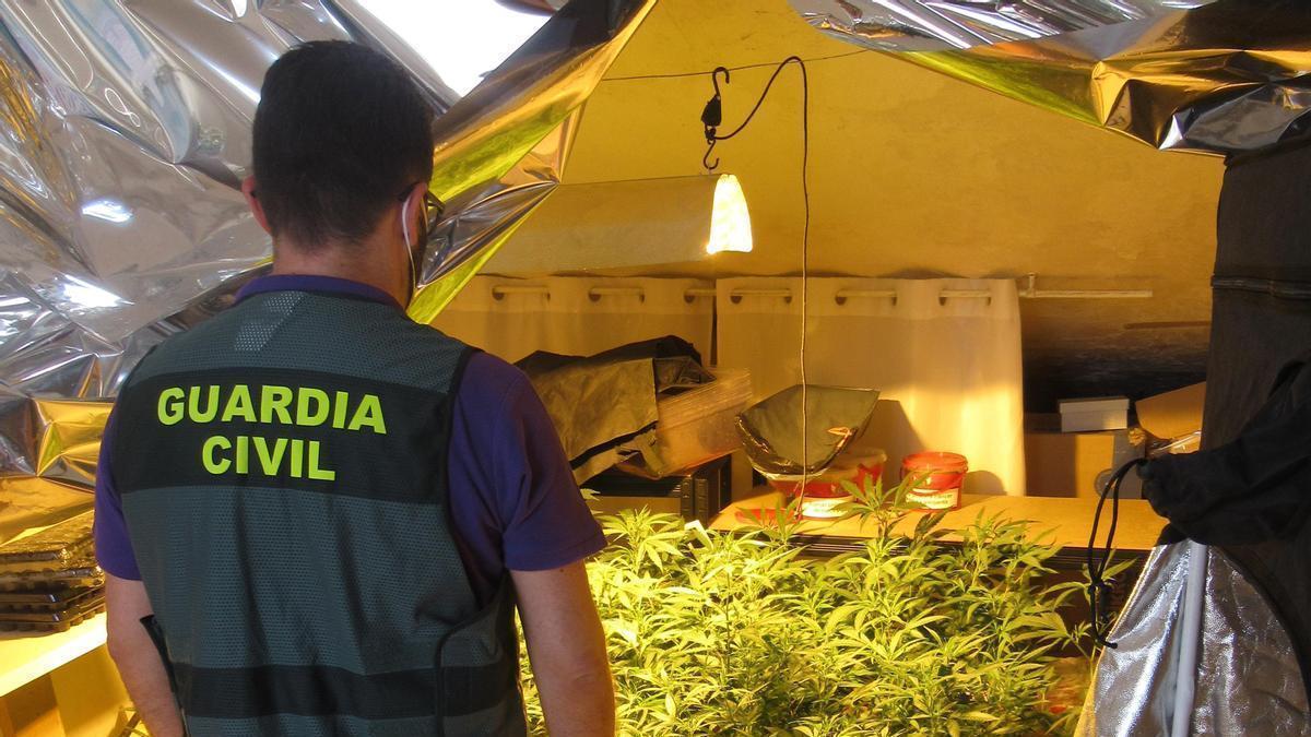 Un agente supervisa la plantación de marihuana.