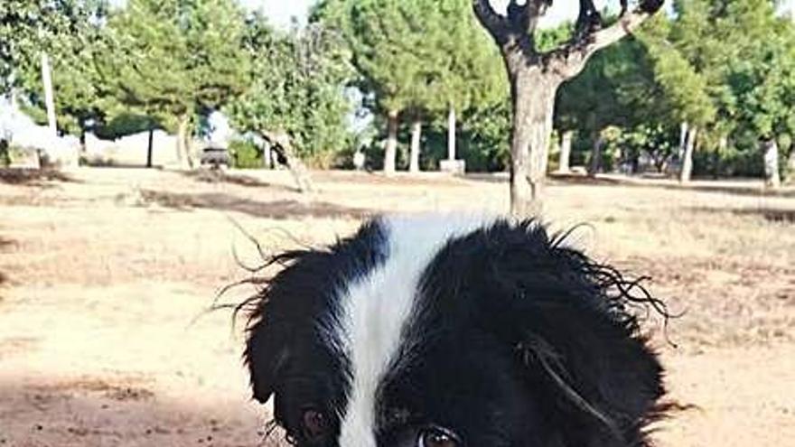 Rescatan a un perro abandonado dentro  de un saco atado