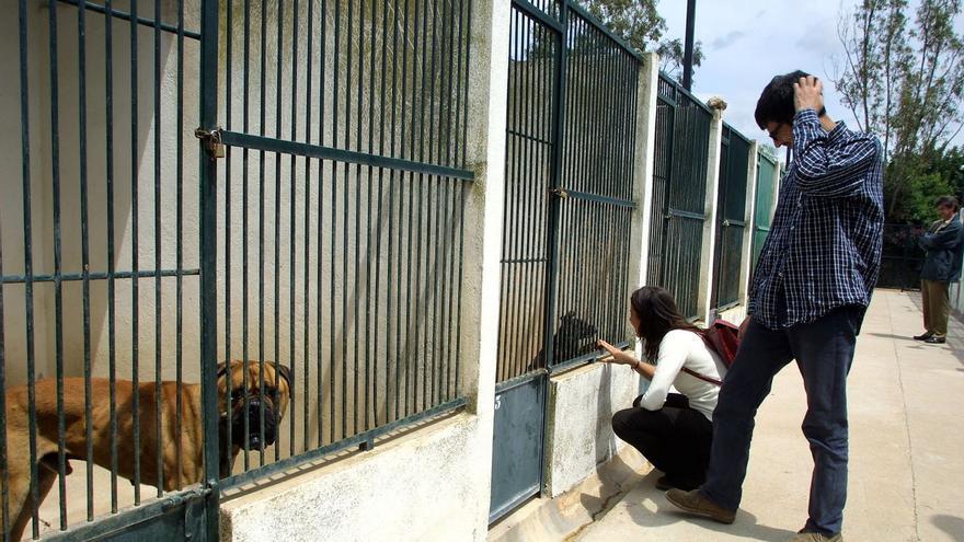 Cae el número de perros acogidos en Son Reus por abandonos y renuncias