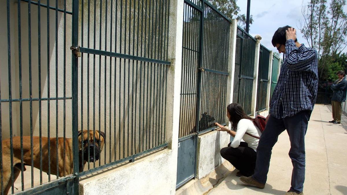 Jaulas para perros del centro de protección animal de Son Reus.
