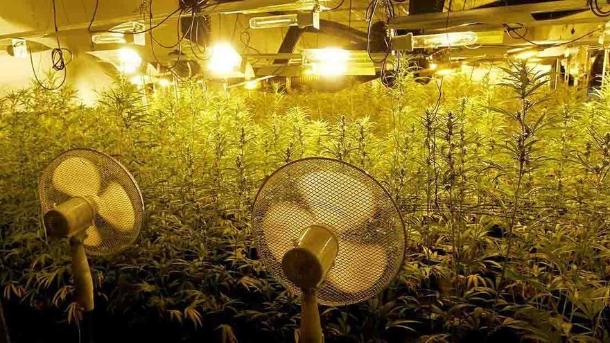 Cuatro menores, uno de ellos recién nacido, vivían en un chalé de Valencia que escondía mil plantas de marihuana
