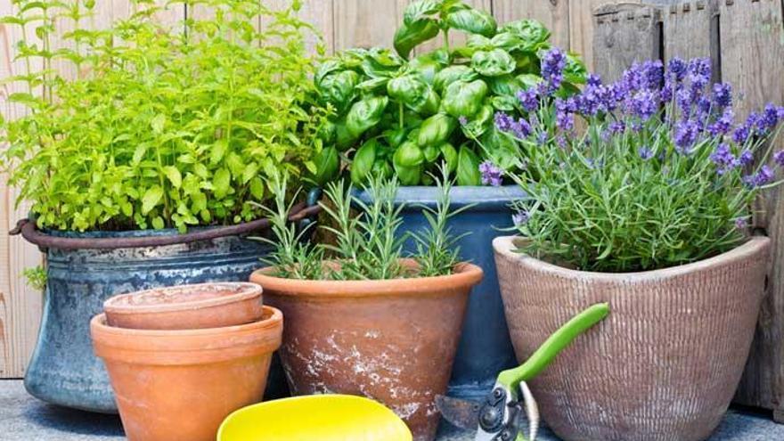 Cinco plantas que debes de tener en casa para ahuyentar a los mosquitos