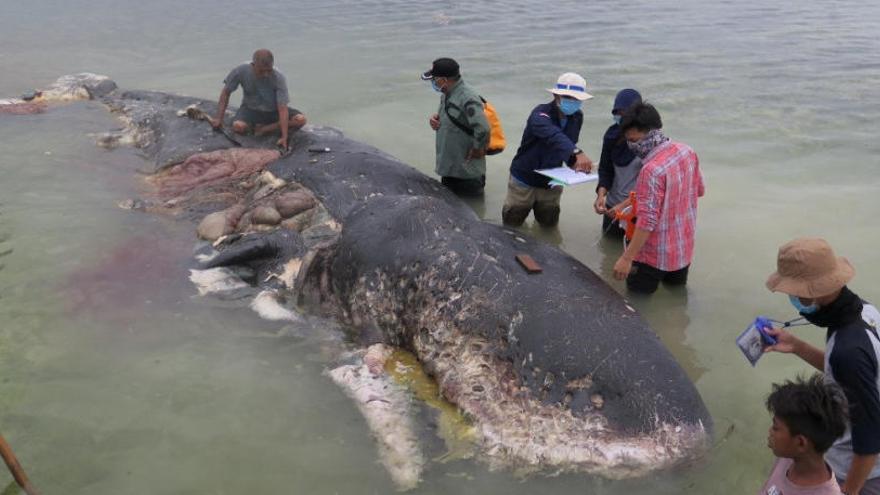 Aparece una ballena muerta en Indonesia con más de mil plásticos en el estómago
