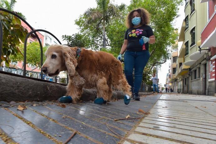 04-05-2020 LAS PALMAS DE GRAN CANARIA. Beba pasea a su perro Galo que lleva     04/05/2020   Fotógrafo: Andrés Cruz