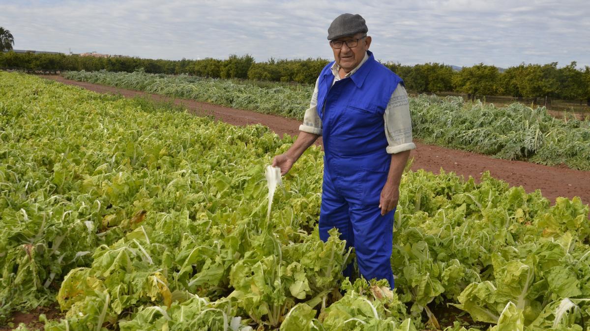 Vicente Canós, agricultor de Moncofa, muestra como ha quedado su finca de hortalizas