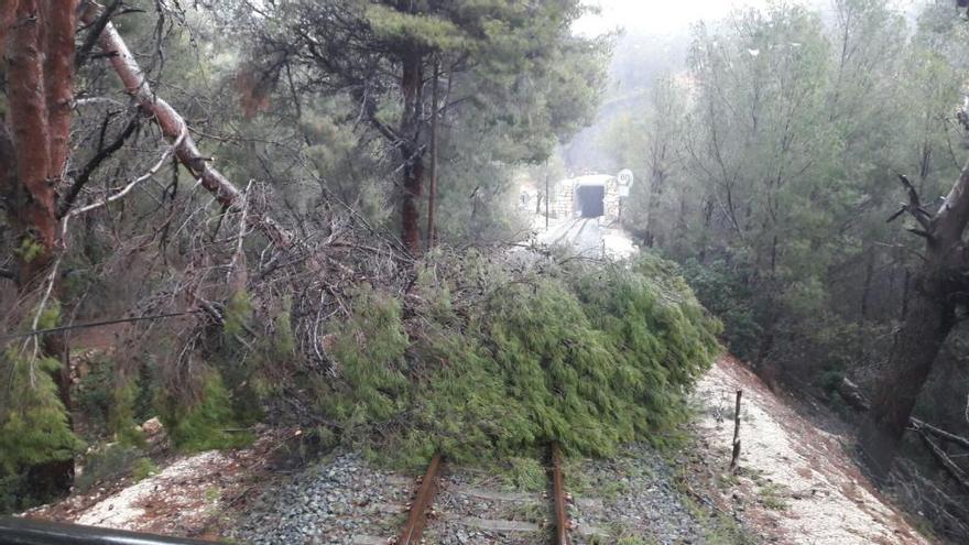 FGV restablece el tren entre Altea y Calp tras retirar los árboles caídos en la vía