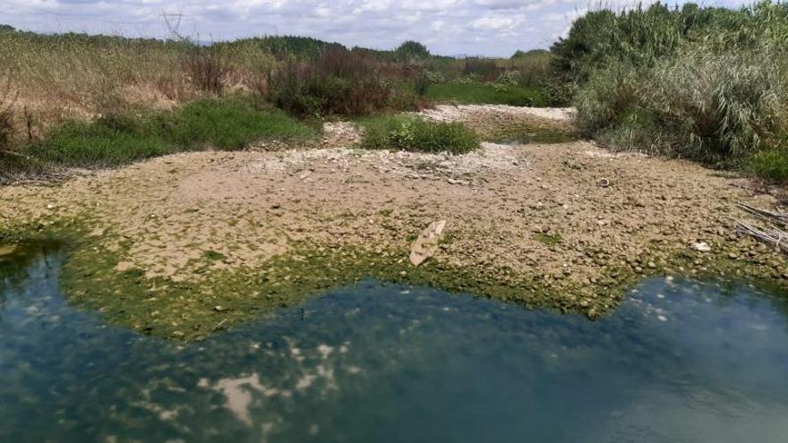 Los regantes aportan agua de la Acequia Escalona para recuperar el río Albaida