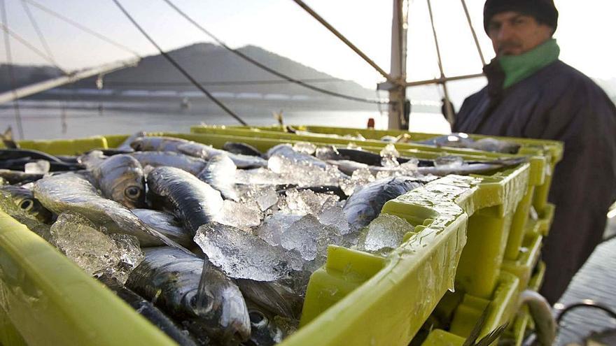 El buen estado del recurso permite doblar el cupo de sardina en el mar Cantábrico