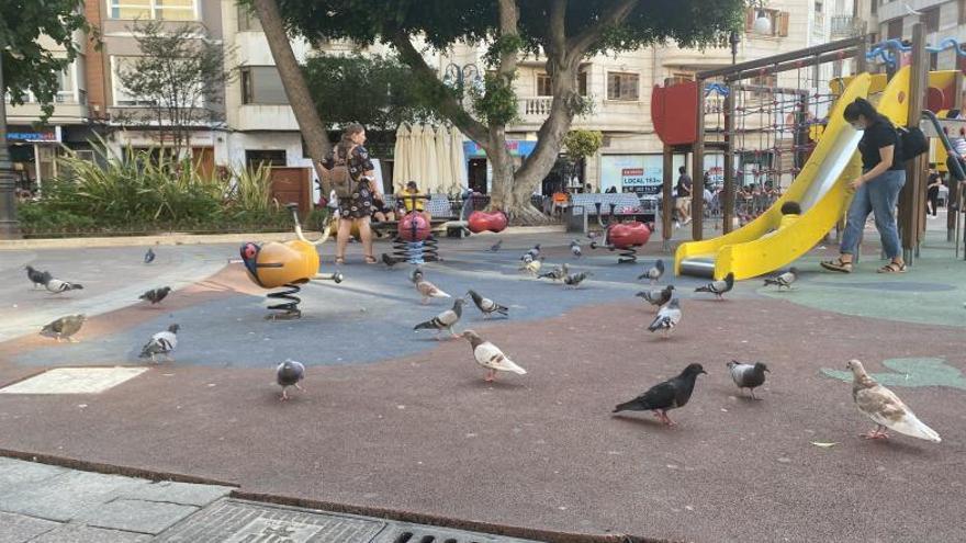 El exceso de palomas en el centro de Alzira ya preocupa al ayuntamiento