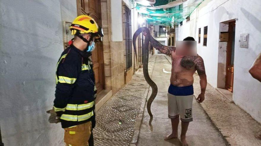 Una serpiente de dos metros y medio aparece en una calle de Alicante