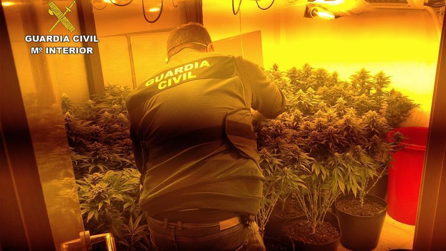 Desmantelan cuatro invernaderos clandestinos de marihuana en Los Alcázares