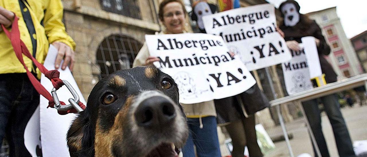 Una pasada concentración para reivindicar la construcción del albergue de animales. | Miki López