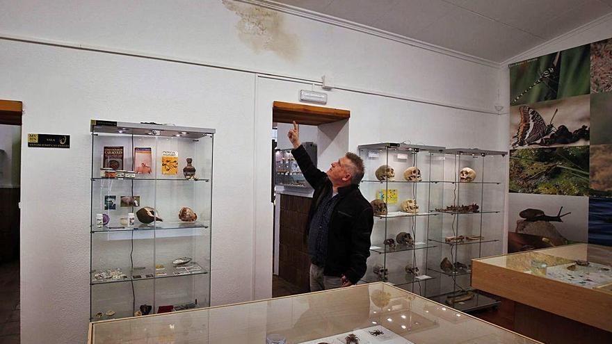 El museo de Historia Natural baraja abandonar       Alginet por falta de ayudas
