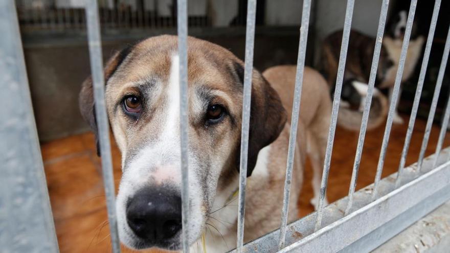 Una protectora empieza a auditar la nueva gestión del albergue de animales