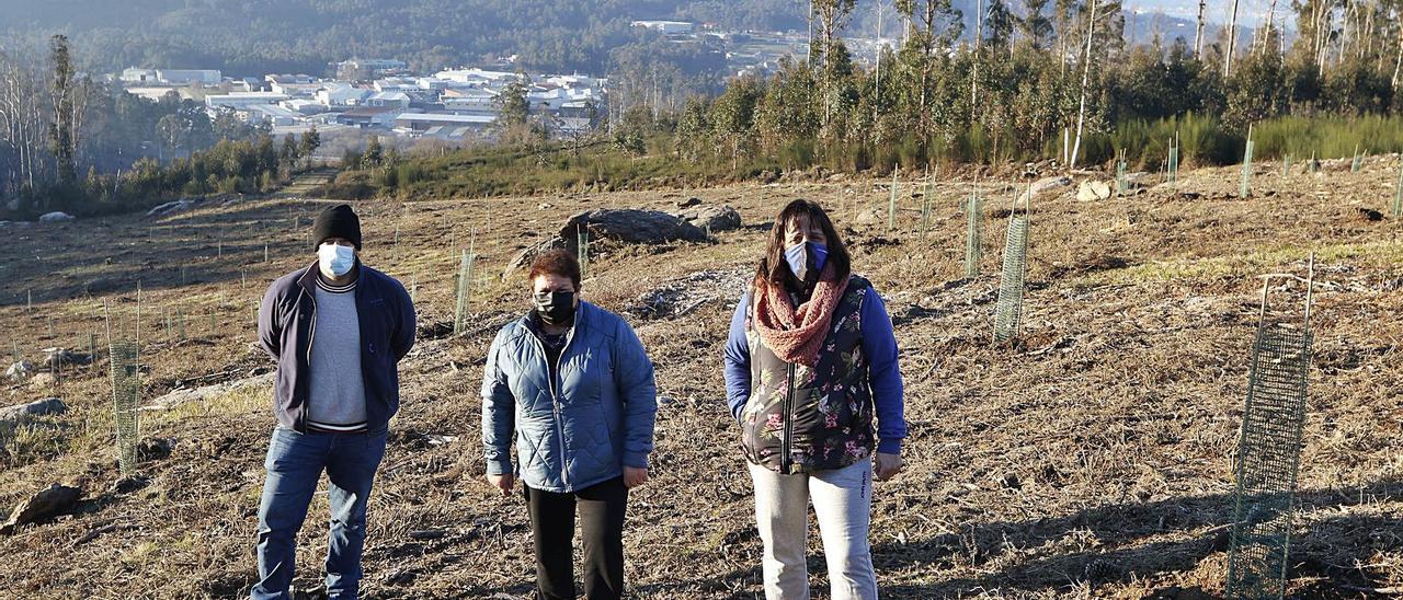 José Taboada y dos directivas de la comunidad de montes,  ayer en la plantación de secuoyas.     | // ALBA VILLAR