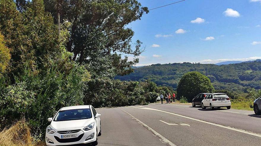 Una rama grande cae sobre un coche en marcha en Soutolongo y sus ocupantes resultan ilesos