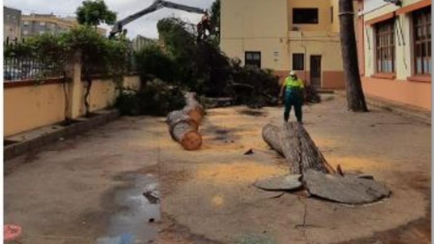 Albal retira el pino centenario caído en un colegio por la tormenta