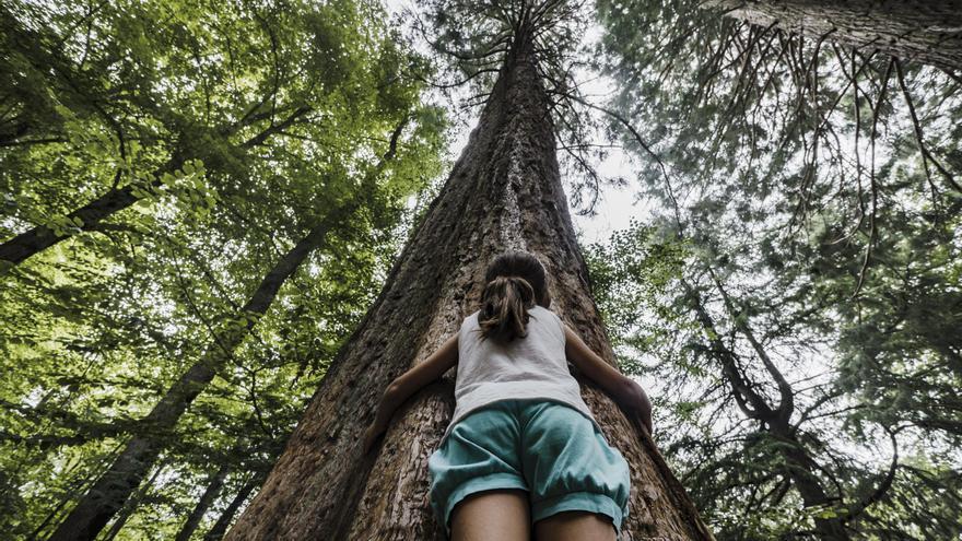 CaixaBank lanza la 'Convocatoria de Medioambiente 2021' para apoyar proyectos de mejora del patrimonio natural en Aragón