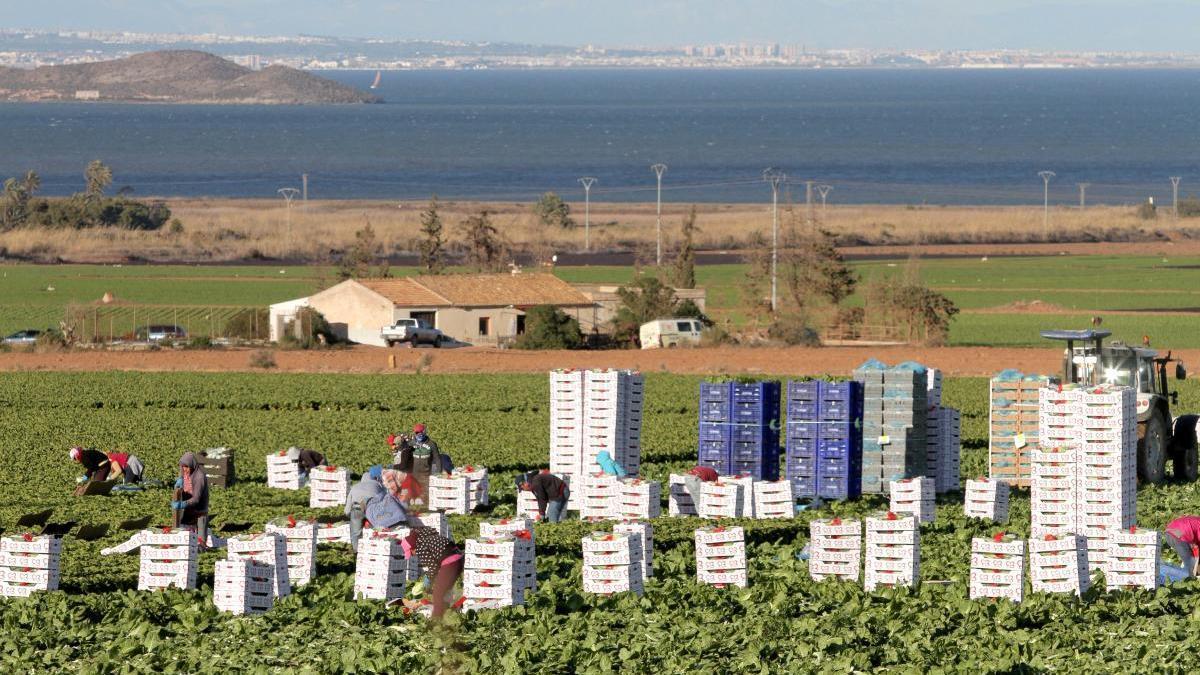 Agricultores trabajando en unos cultivos de regadío próximos al Mar Menor.